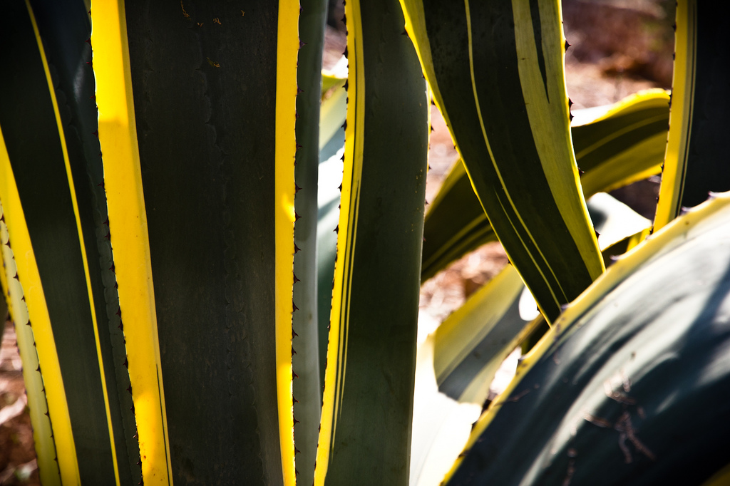Detailaufnahme eines Kaktus