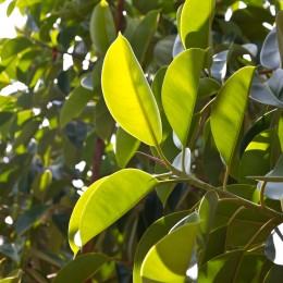 Detail eines Baums